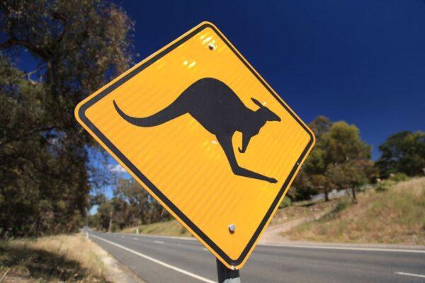 Australien in 100 Tagen, Vorsicht Kangaroos,eine DVD von Silke Schranz und Christian Wüstenberg